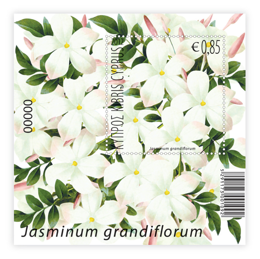 Aromatic Flowers Jasmine